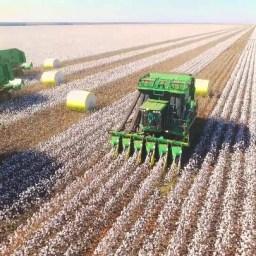Agricultores da Bahia devem colher a segunda maior safra de algodão da história
