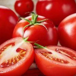 IBGE estima aumento de 20% em safra de tomate da Bahia em 2019