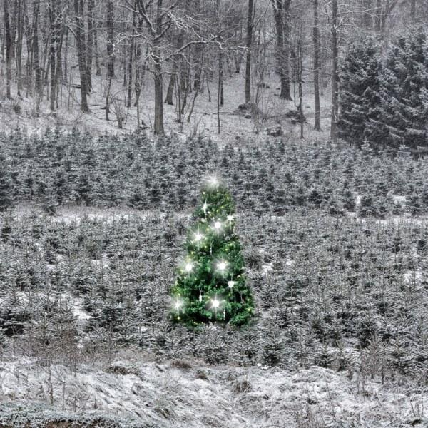 Concerto pour la nuit de Noël