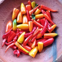 Spices: All about Chillies and Chilli Types