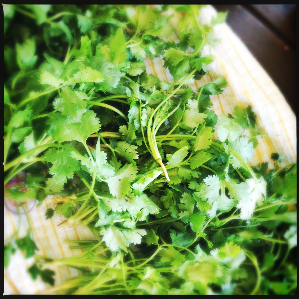 Ingredients: How to Use Leftover Green Coriander (Cilantro)