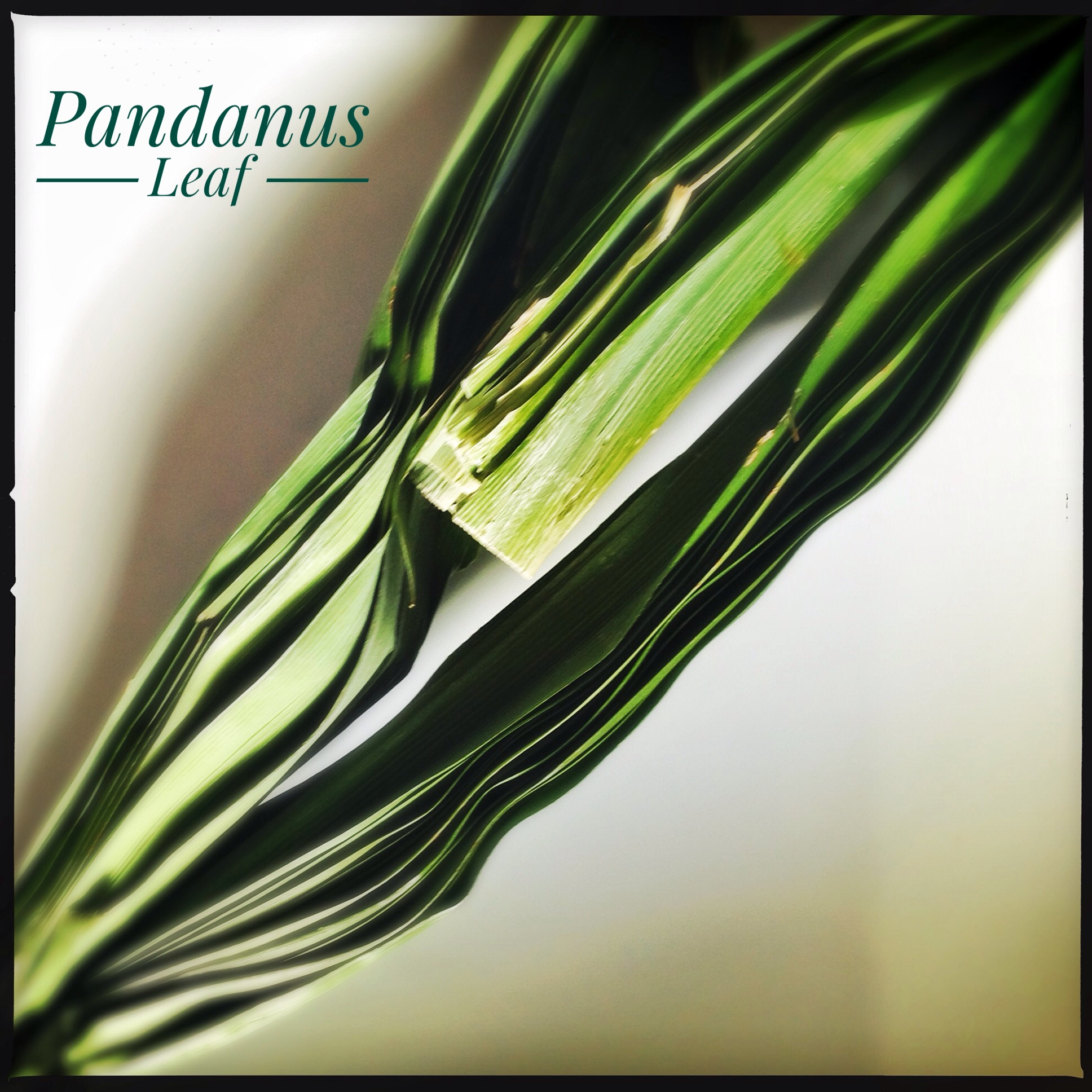 Ingredients: Pandanus | Pandan Leaf | Screwpine Leaf | Kewa