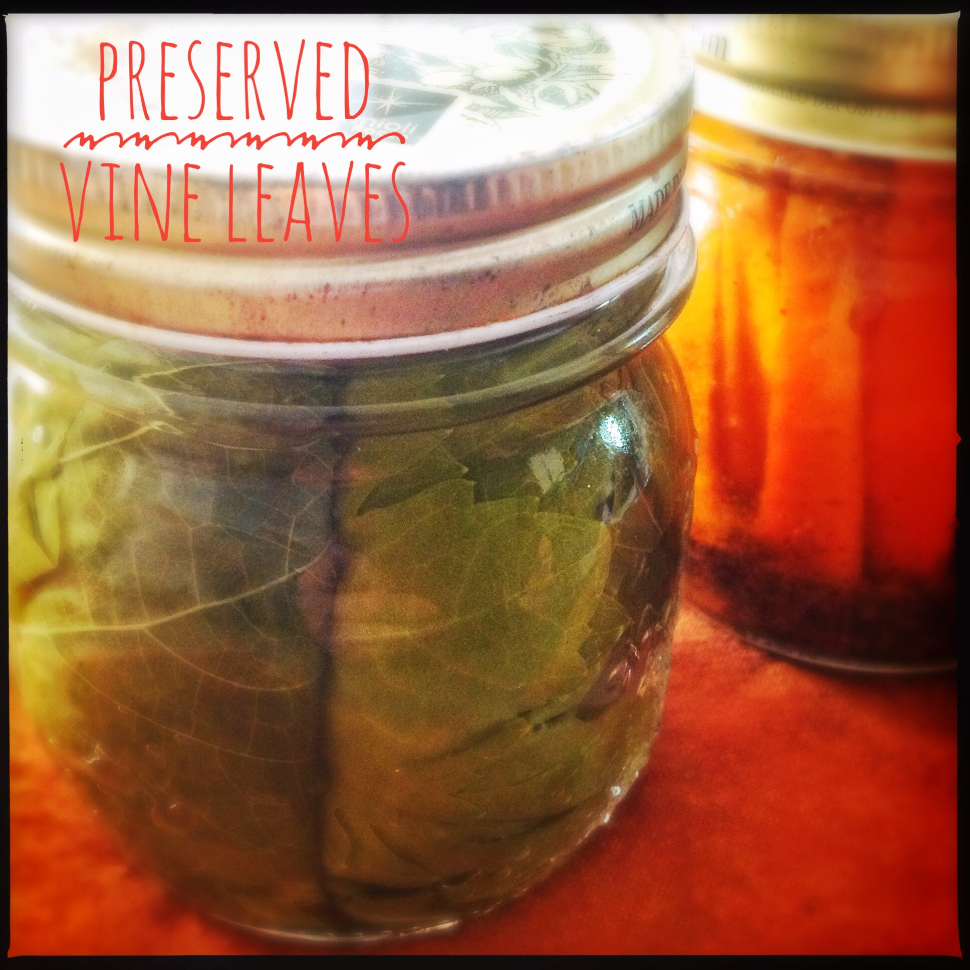 Ingredients: How to Preserve Grape Vine Leaves