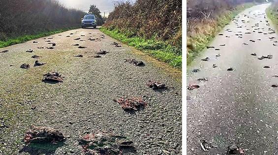 Mii de păsări moarte cad misterios din cer!