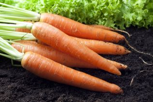 carrot-f1-king