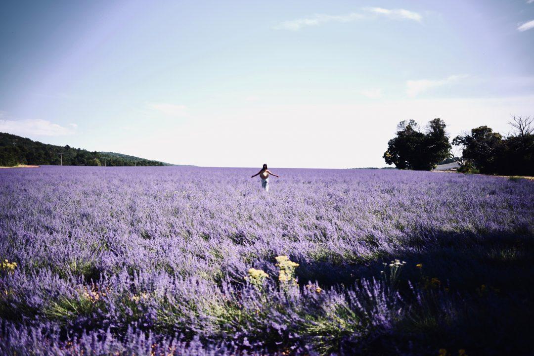 Découvrir la lavande de Provence en Van