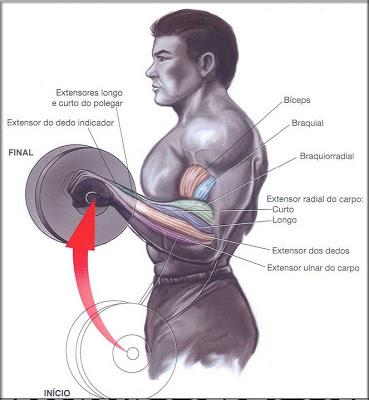exercícios-para-antebraço