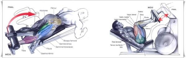 Flexão-de-joelhos-Leg-press