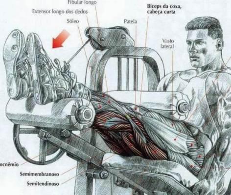 Treino abcde Flexão de joelhos sentado na cadeira (máquina)