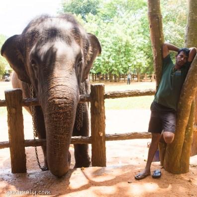 象の孤児院。いいポジションをとっているスタッフ。