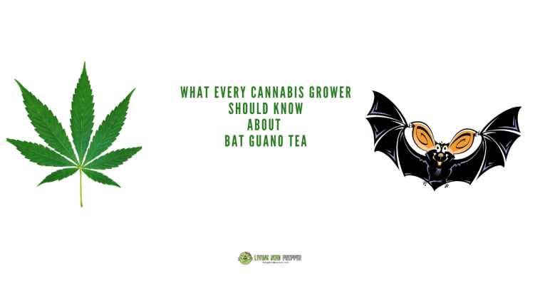 Bat Guano Tea Recipe