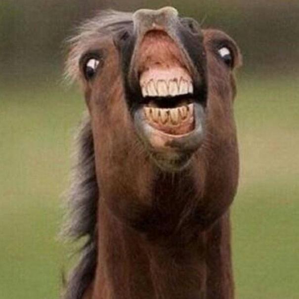 笑ってください。 動物の変顔! Part 3