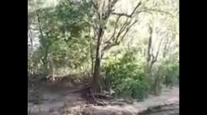 【閲覧注意】 中国で木から落ちて首の骨を折り即死する事故がありました。