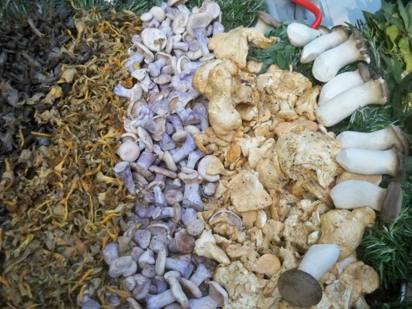Much shrooms