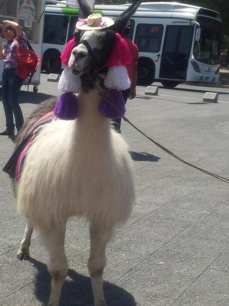 random-llama.jpg