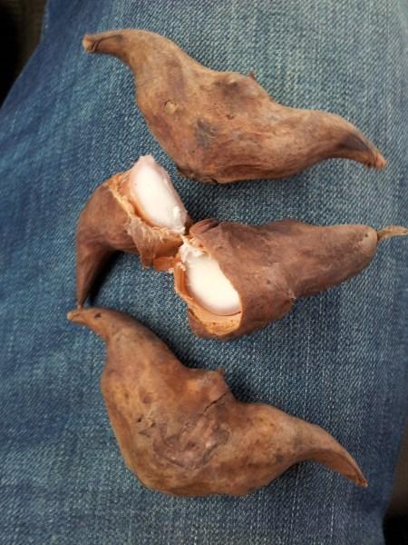 Weird nuts