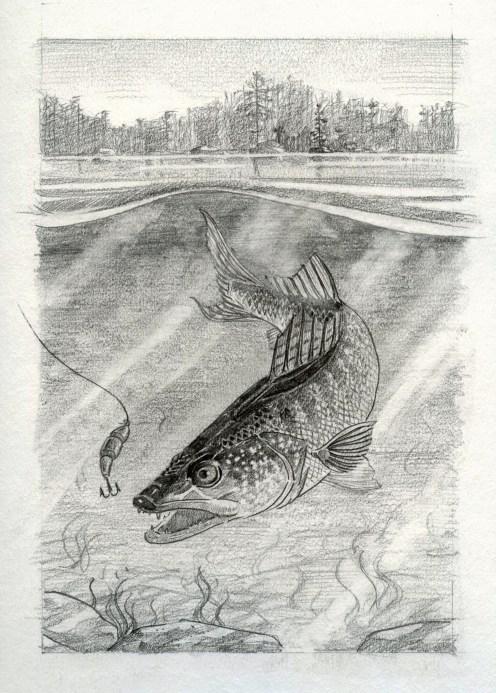 Badger Sketch001