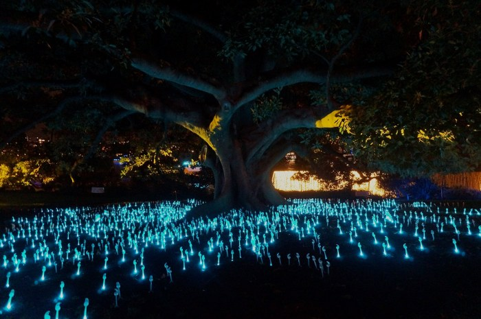 Botanical Garden during Vivid Sydney Festival