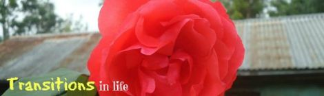 "Image of red rose with quote ""Transitions in life can offer opportunities for discovery provided we are open to random encounters and serendipitous events"