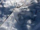 Ingleborough - Ice Coated Grass