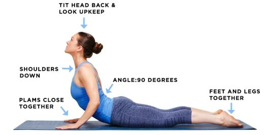 Image result for Cobra Stretch Exercise