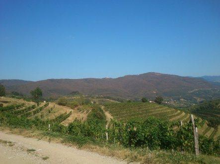 Tag 2: Slowenische Weinberge