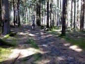 Wege auf dem Schellenberg