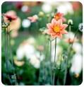 Día 239/365 : Agosto 29, 2013 : Jardín fresco