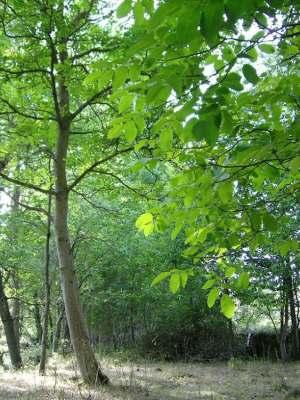 vegetacion-garcimolina(2)