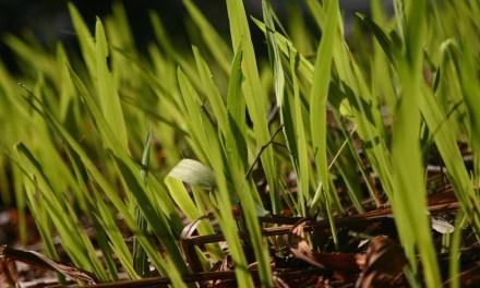 Rasen wächst nicht – typische Fehler und Hindernisse
