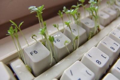 Kresse kreativ anpflanzen