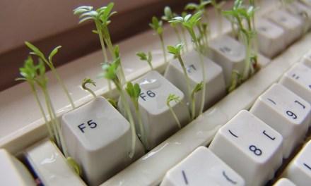 Kresse anpflanzen – die Eigenschaften der Pflanze