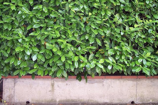 Gedanken zum Garten: Pflanzen statt Holz- und Metallzäune