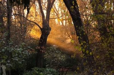 Wald mit Pflanzen