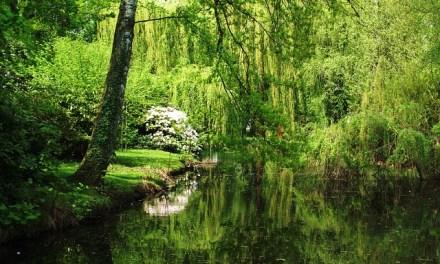 Übersicht zu Landesgartenschauen 2015 – und warum ich mindestens eine ansehen will