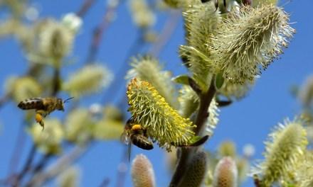 Hallo Frühling: 3 Tipps gegen Heuschnupfen