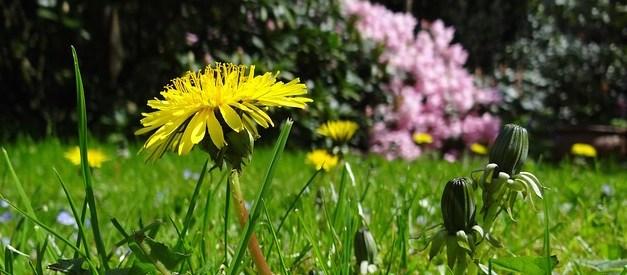 Einfach mal Rasen wachsen lassen – ein Erfahrungsbericht