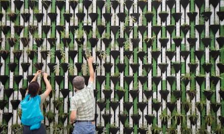 Wie Verkäufer von Gartenprodukten mit Ratgeberportalen punkten