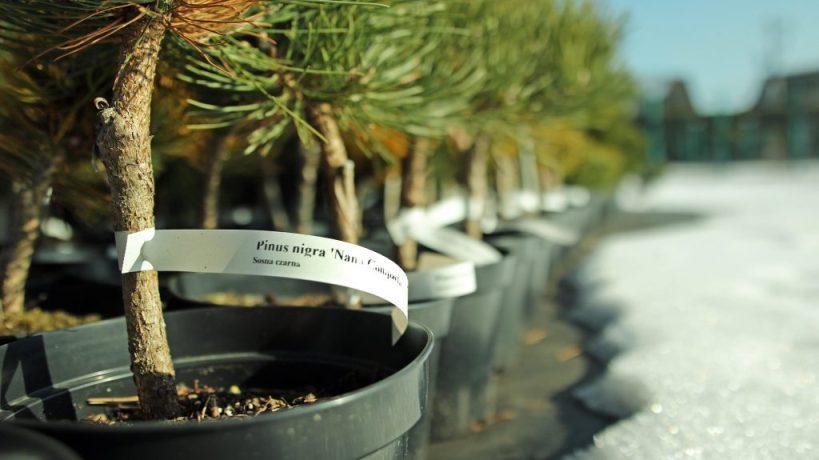 Dlaczego warto wybrać produkty zgamy Garden-Label