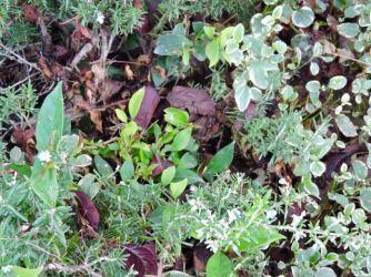 garden-greenery-1-1