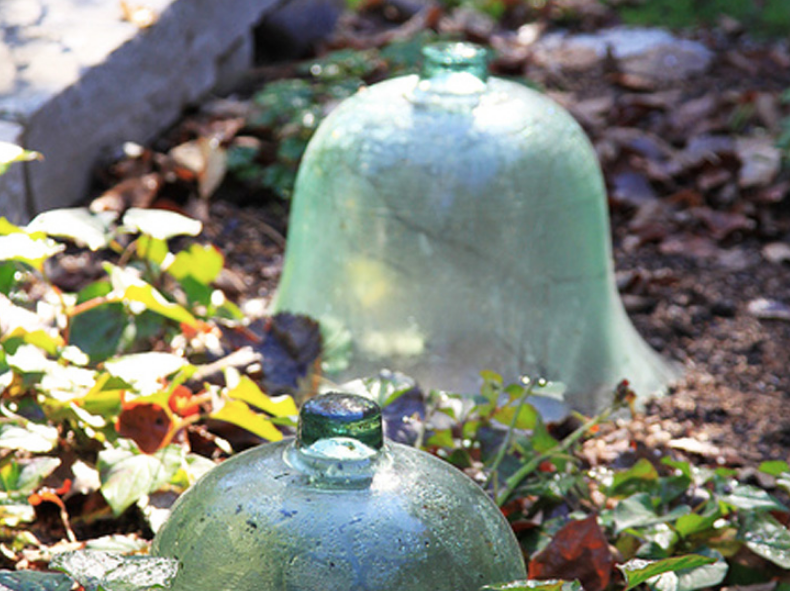 winter vegetable garden, winter garden, winter gardening, cloche, glass cloche, garden cloche