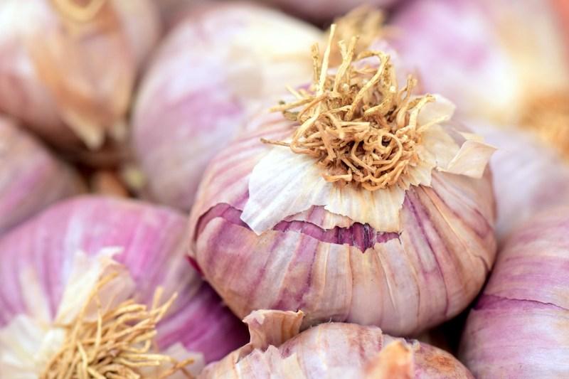 garlic varieties, garlic, growing garlic, rocambole, rocambole garlic, planting garlic