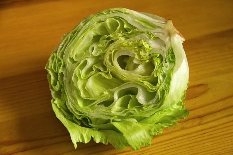 growing lettuce, iceberg lettuce, crispino lettuce, iceberg, lettuce, crispino iceberg lettuce
