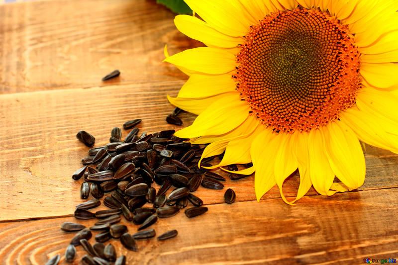 sunflower microgreens, how to grow sunflower microgreens, microgreens, how to grow sunflower sprouts