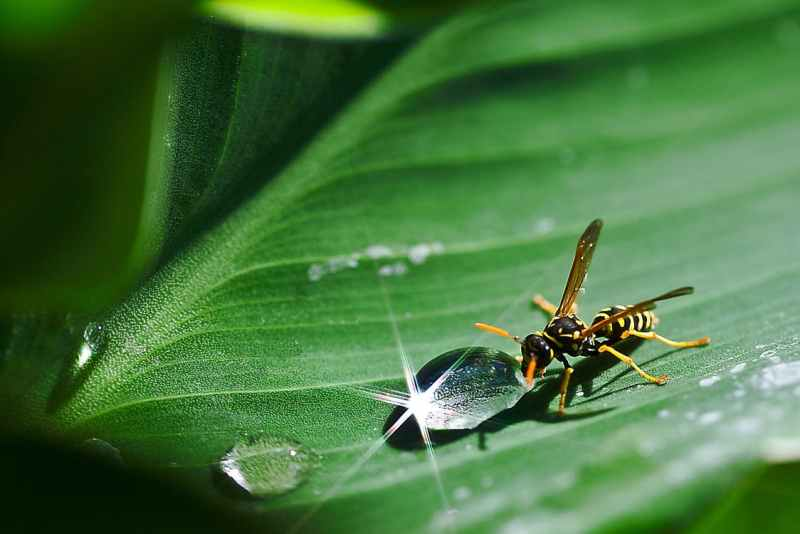 paper wasp, paper wasps, paper wasp nest, wasps, pest control, unwanted insects, unwanted bugs