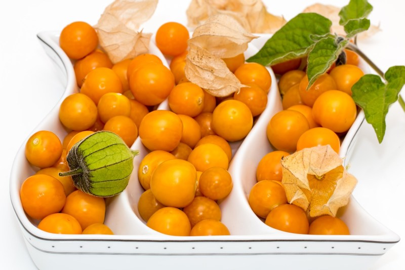 ground cherries, physalis, eating ground cherries