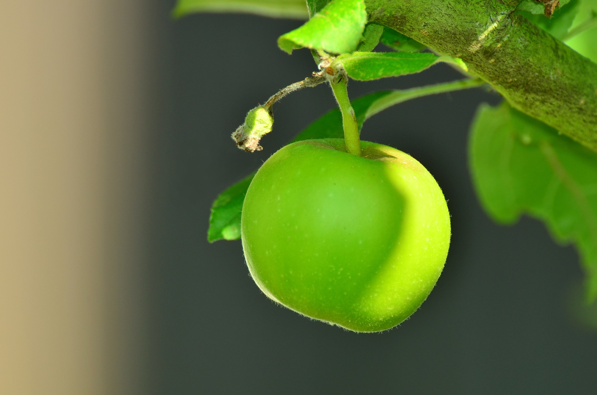 All You've Ever Wanted to Know About Growing Beautiful Crab Apples
