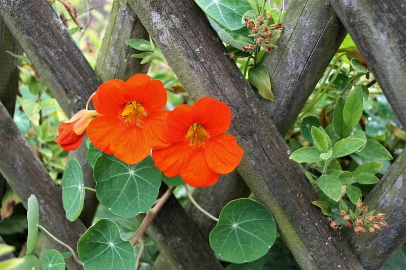 kid-friendly vegetable gardening