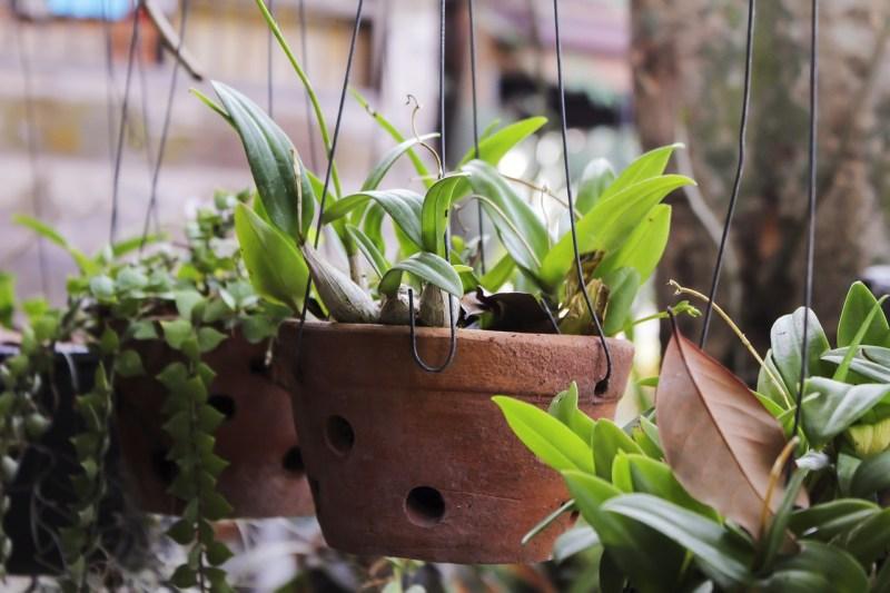 Clay pots indoors
