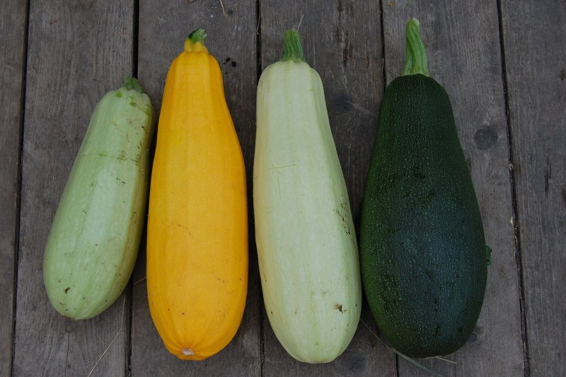 growing zucchini varieties